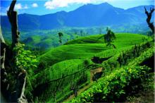 Tee aus aller Welt